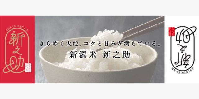 【県公式】『新潟米 新之助 しんのすけ』きらめく大粒、コクと甘みが満ちている