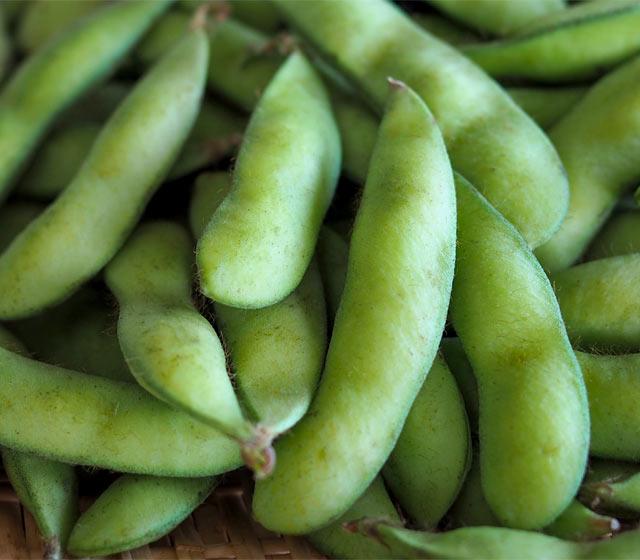 これからの季節に欠かせない枝豆をこよなく愛しているのが、新潟県民