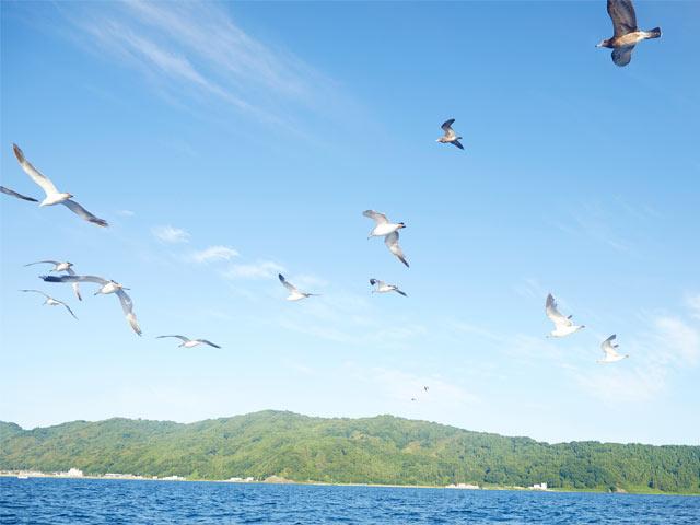 漁船の周りに集まってきたオオミズナギドリ