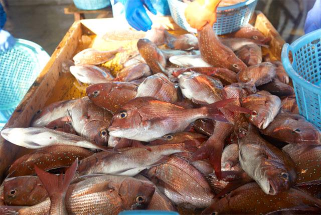 この日水揚げされた魚たち