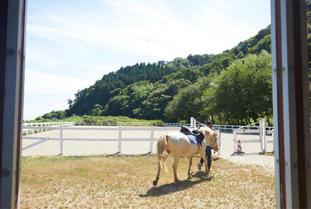 子どもたちが乗りやすい北海道の〈どさんこ〉という品種の馬を中心に飼育