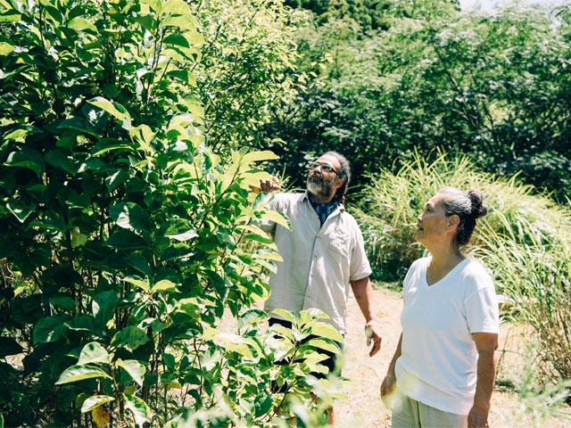 自宅の庭にて。柿、イチジク、ベリーといった木がたくさん。