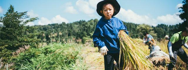 〈まつだい棚田バンク〉の稲刈りに参加する子ども