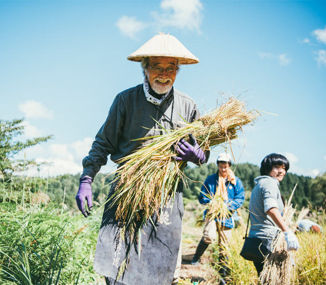 稲刈りの服装。頭にかぶった笠、酒蔵の前かけと、トラディショナル&スタイリッシュ