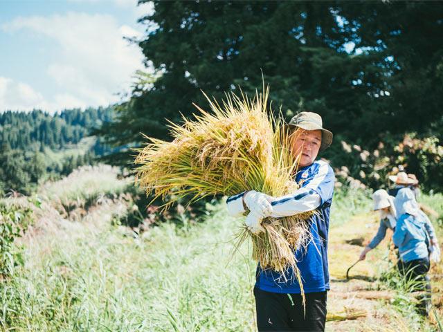 大量の稲を抱える参加者。まるで大きな花束をもっているかのよう