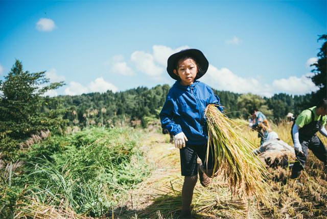 刈った稲を抱える子ども