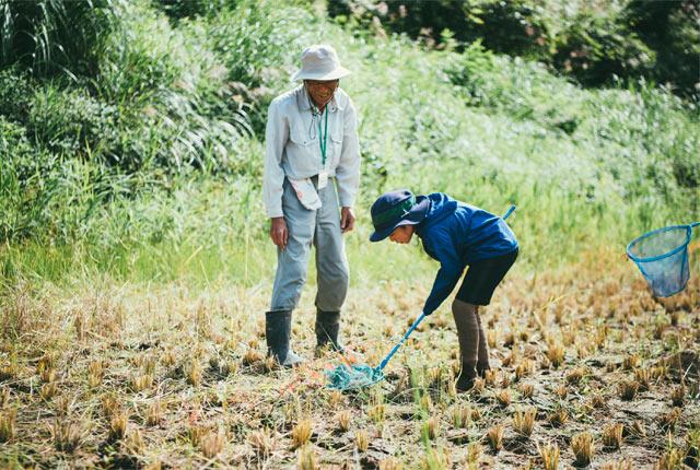 虫取り網で田んぼのバッタを捕まえる子ども