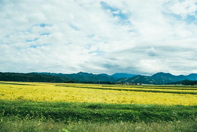 庭園街道の両側に広がる田んぼ