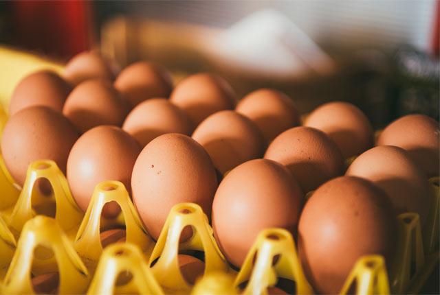 〈渡辺鶏園〉の卵