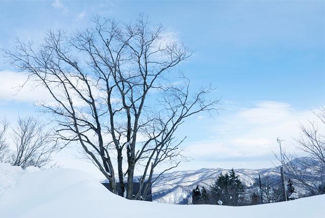 妙高高原の雪景色