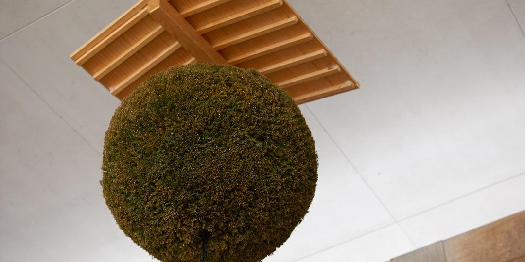 日本文化と出会い、身ひとつで新潟へ留学