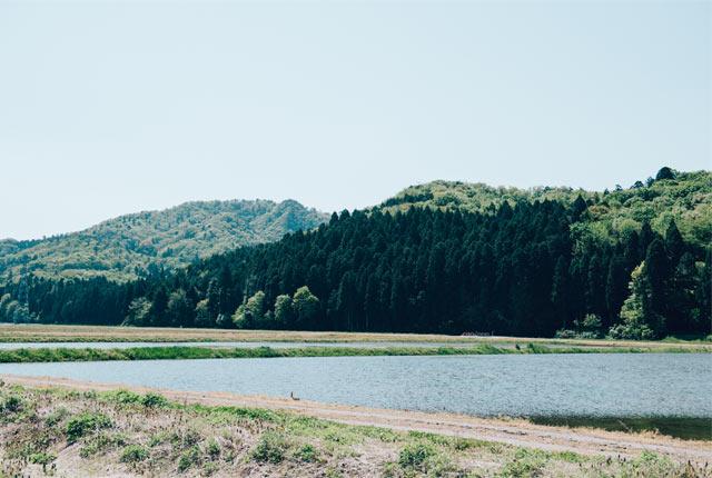 新発田市の田園風景