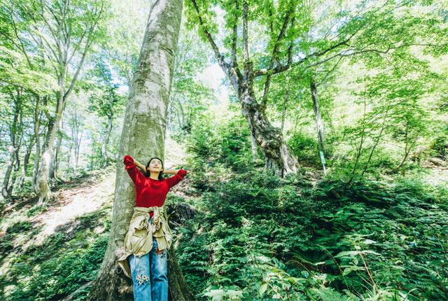 奥胎内ヒュッテ内の森