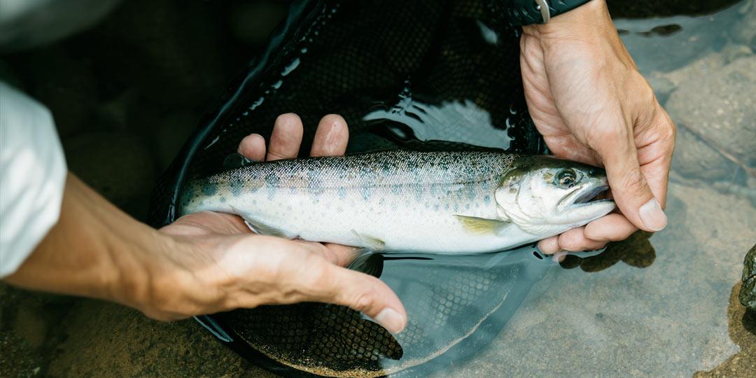 自然に溶け込む渓流釣りは癒やしがいっぱい!