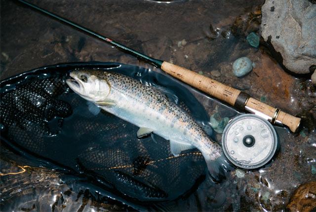 釣れた川魚