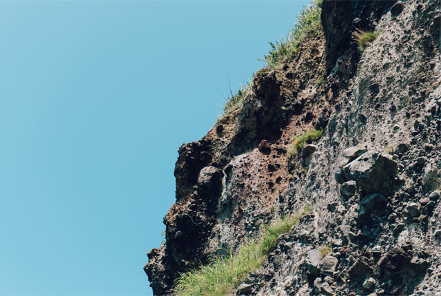 岸壁の岩ユリ