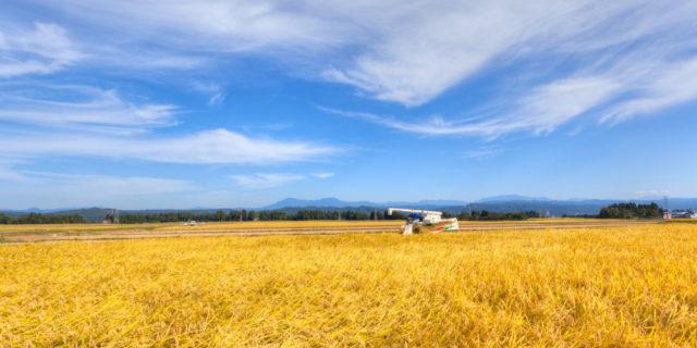 【9/22】「米と酒 魚沼の陣」で、雪国のお酒や新米おにぎりを!