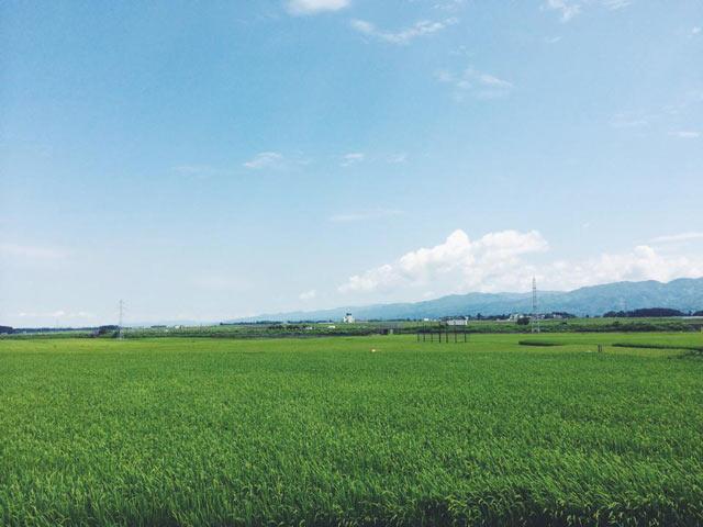 十日町市の田園風景