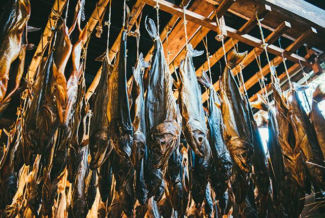 吊るし干しして鮭を熟成発酵中