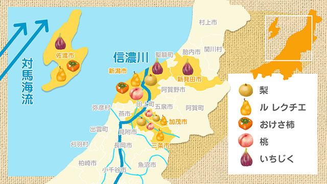新潟県の秋のフルーツマップ