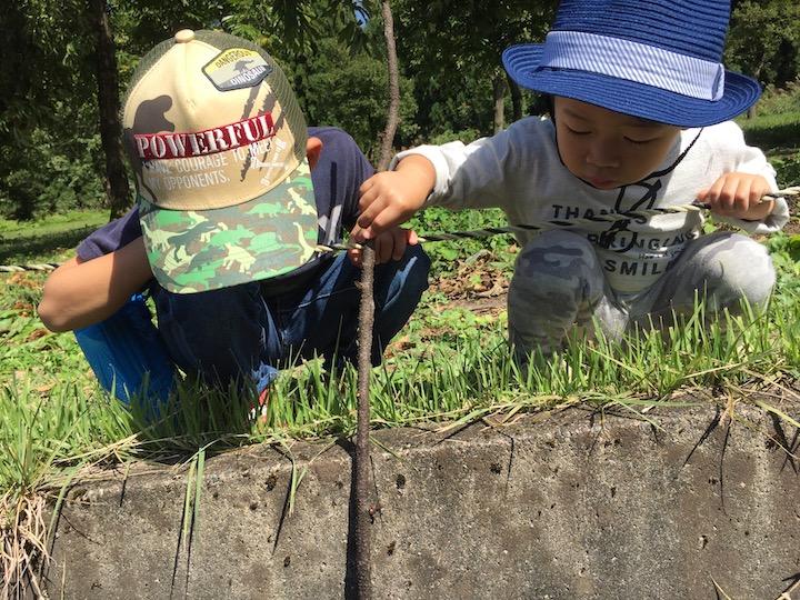 木の棒で遊ぶ子どもたち