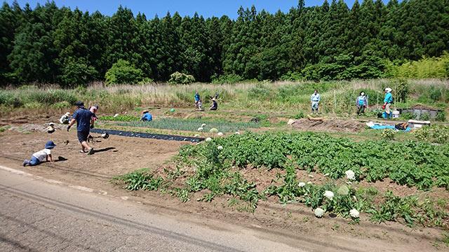野菜を植えるメンバー