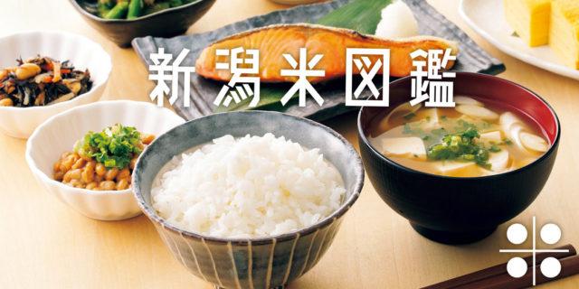 待ちに待った新米の季節。新潟を代表するブランド〈新之助〉〈コシヒカリ〉〈こしいぶき〉の違いって何?