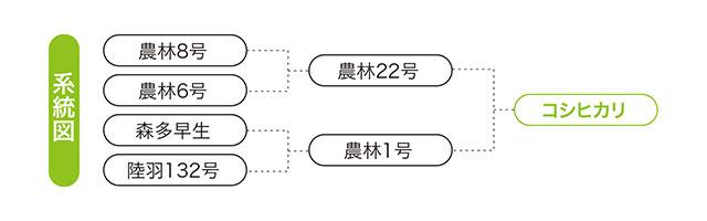 コシヒカリの系統図