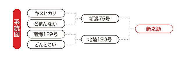 新之助の系統図
