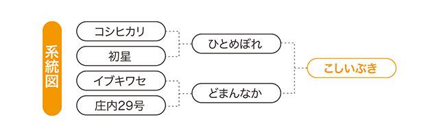 こしいぶきの系統図