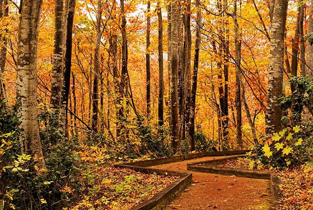 紅葉の中を歩ける遊歩道
