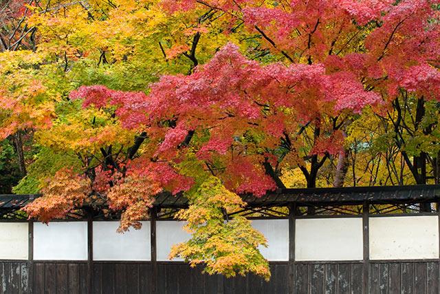 中野邸記念館の紅葉