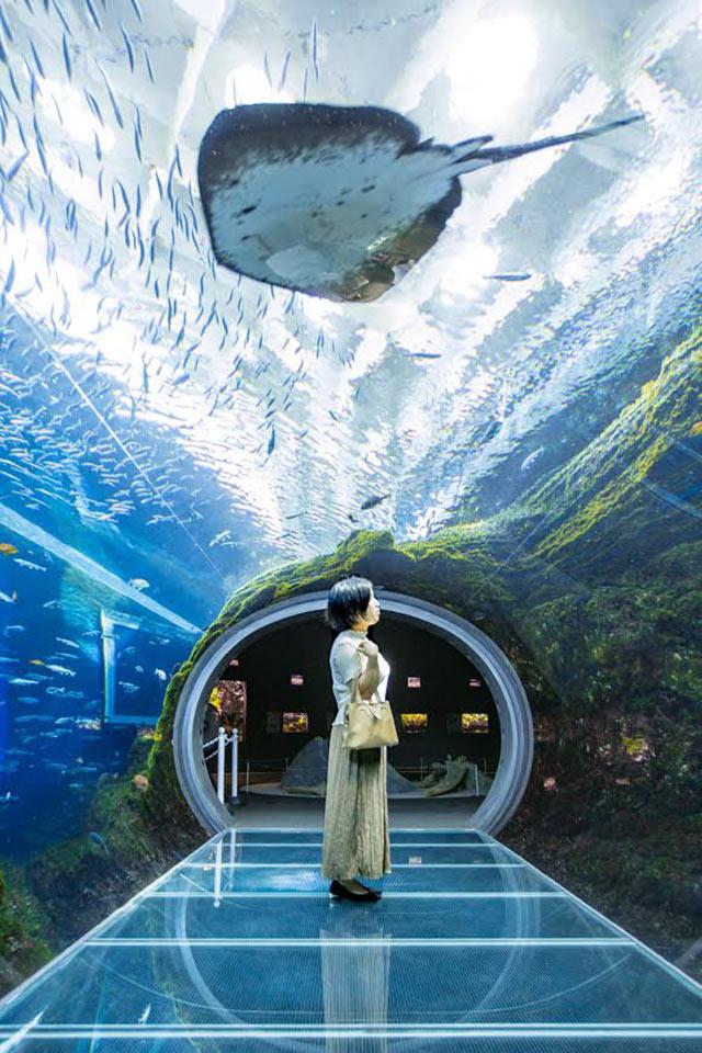 上越市立水族館博物館うみがたり