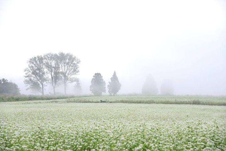 山本山のそば畑