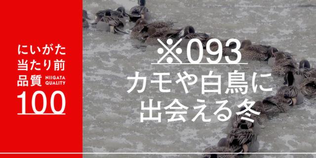 冬になるとカモや白鳥がたくさんやってくる、村上市「お幕場・大池公園」で見つけたカモの行列