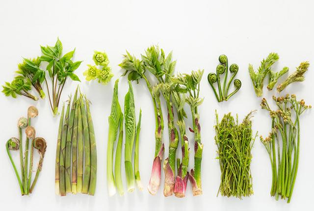 十日町市で採れた山菜