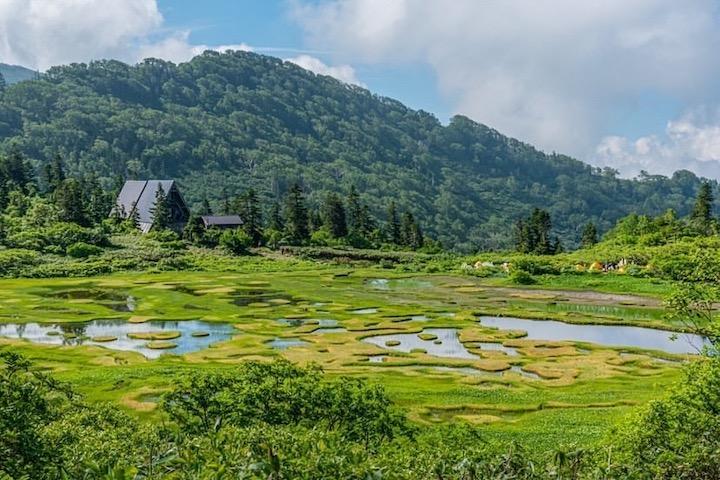 夏の高谷池